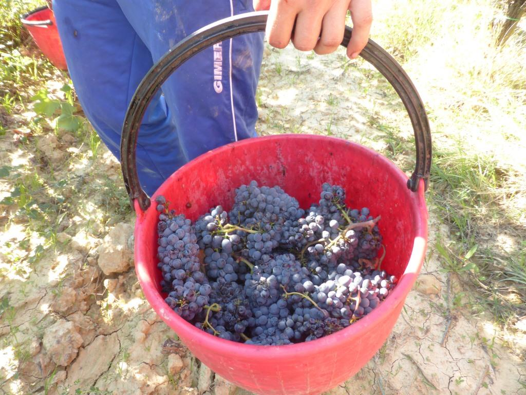 complessità-del-vino-l'importanza-della-vendemmia