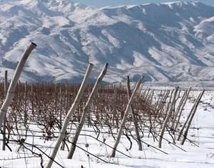 Vigneti-ad-alta-quota-karasi-img-02Tsorah, Karasi Areni Noir, Armenia
