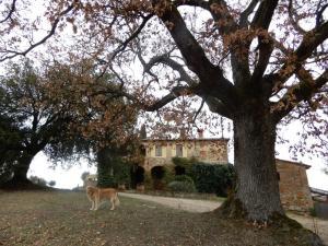 Natura-alla-Fattoria-del-Colle-Quercia-Italia