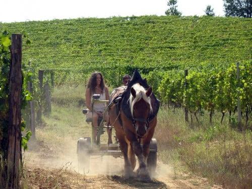 animali-nelle-vigne-Gianfranco-Fino