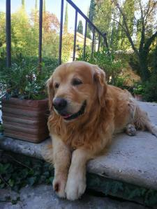 wine-dogs-cani-vignaioli-Fattoria-del-Colle-Felix ottobre 2018