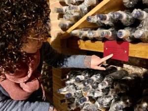 Brunello antiquario, vendite on-line - Donatella Cinelli Colombini