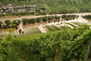 2021-cray-climate-floods-in-german-vineyards