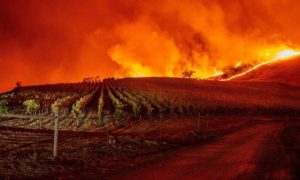 2021-crazy-climate-heat-peaks-and-fires-in-californian-vineyards