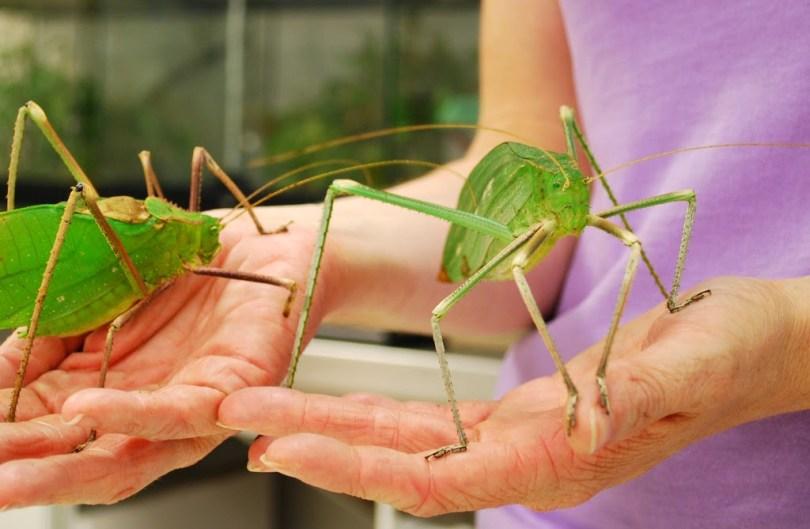esperancas-gigantes Grandes Esperanças, de Dickens, ganhará versão com insetos gigantes