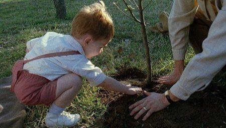 cinemanet | el árbol de la vida