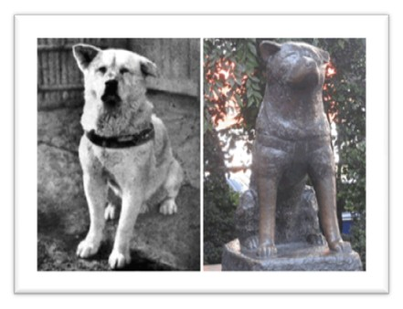 Αποτέλεσμα εικόνας για hachiko real dog