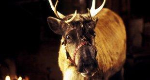 Blizzard, le renne magique du Père Noël photo 1