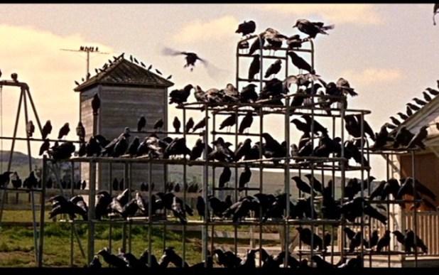 Retour sur Les Oiseaux d'Alfred Hitchcock