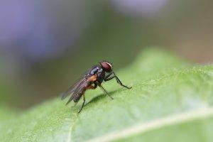 Feromoni sostanze volati prodotte dalla femmina per combattere i fitofagi. Scopri le innovative trappole a feromoni Cinogarden.