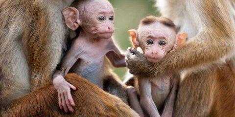 Monkey Kingdom - Au royaume des singes