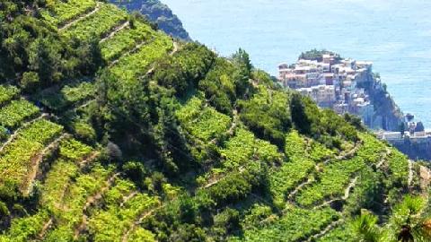 Vignes a flanc de colline Cinque Terre