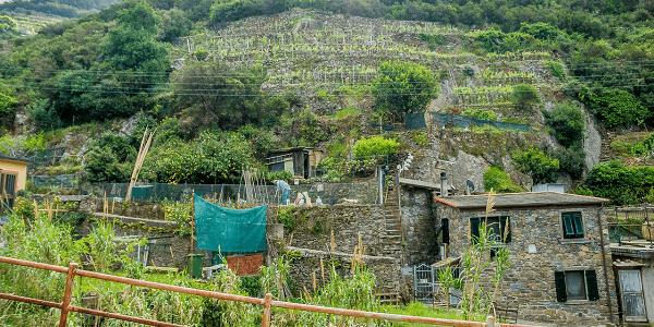 Sentier randonnee Cinque Terre
