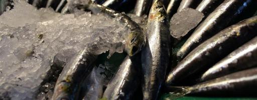Anchois poisson Ligurie