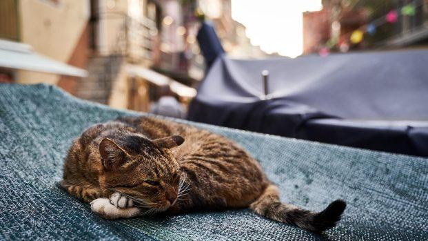 Chat repos Cinque Terre