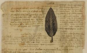 Codice Atlantico di Leonardo, pagina di botanica