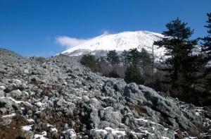 Parco nazionale del Vesuvio, lichene