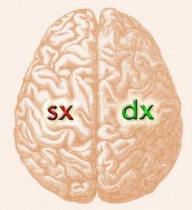Cervello emisferi