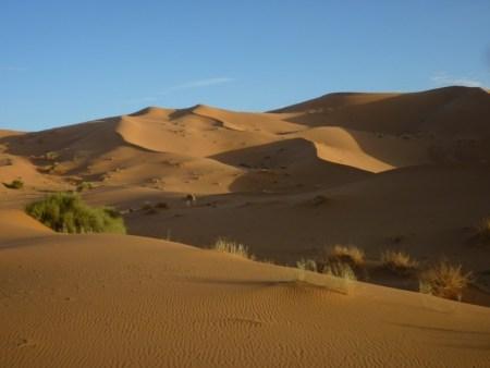 Marocco 2011 297_1