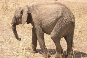 Avventura nel Serengeti, Tanzania