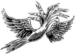 terracanto_solo_uccello