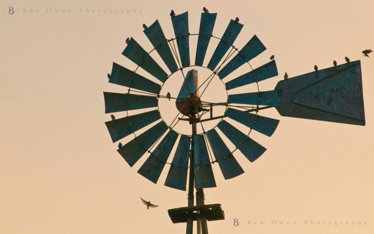 Feathered-Rendezvous-2