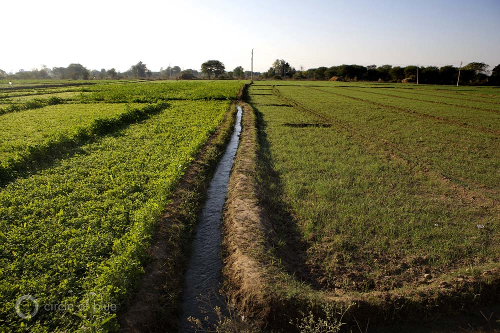 India Punjab Green Revolution farm farming flood irrigation canal farmland groundwater pump electricity well rice wheat grain agriculture irrigation crop cropland water food energy choke point circle of blue wilson center j. carl ganter