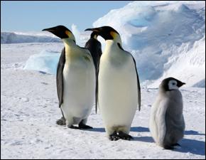 Optimism for Polar Ice in Antarctica