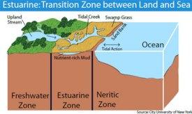 Graphic Estuarine Zone Estuary Haiti Cholera Water Fact Data