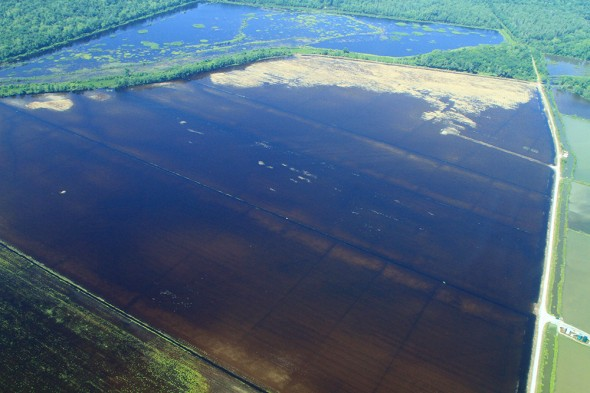 The opening of the Morganza spillway resulted almost immediately in the flooding of farmland located within the floodway. Flooding of farmland caked in fertilizer is a threat to the Gulf of Mexico because it could increase the size of the dead-zone.
