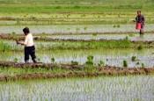 heilongjiang province northeast china food water energy rice farming