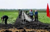 hongxinglong heilongjiang province youyi farm rice paddy northeast china food water energy Choke Point China