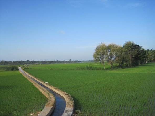 India irrigation canal rice monsoon rain