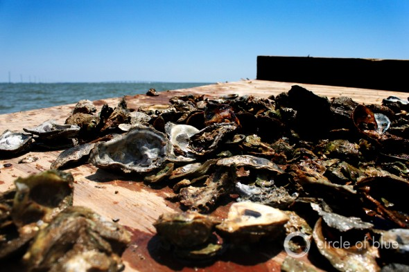 oyster bars Apalachicola Bay florida oysterman franklin county seafood workers association shannon hartsfield
