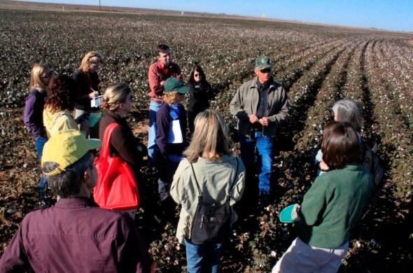 Texas high plains cotton agriculture water management