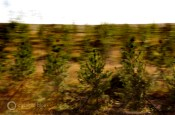 Green Wall of China trees stop desertification drifting sands erosion Inner Mongolia grasslands