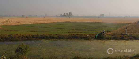 India Choke Point India groundwater pumping surface water reform irrigation agriculture food production rice paddy