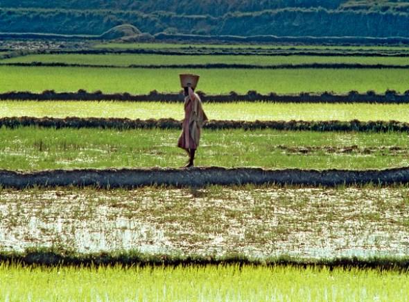 Africa food production Madagascar rice