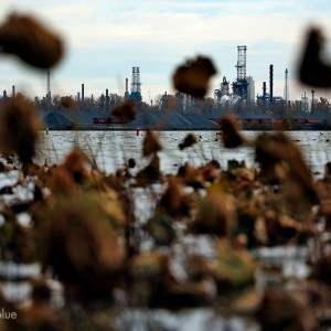 Where the Maumee River feeds into Lake Erie, the city of Toledo relies on the lake to supply drinking water for half a million residents in northern Ohio. Intense algal blooms, which can release toxins capable of causing severe liver damage, caused a neighboring Ohio community water treatment plant to shut down in September.