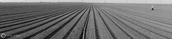 Carlos Sanchez installs irrigation sprinklers on a newly planted onion field in the Westlands Water District in California's Central Valley.