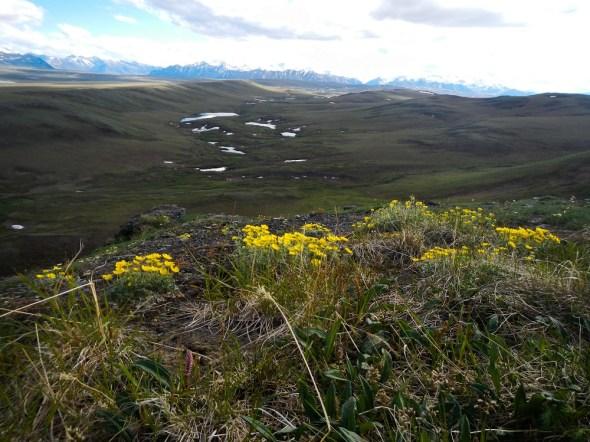 Brooks Range Alaska Arctic