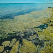 Lloyd-DeGrane-Alliance-for-the-Great-Lakes-Lake-Michigan-1000