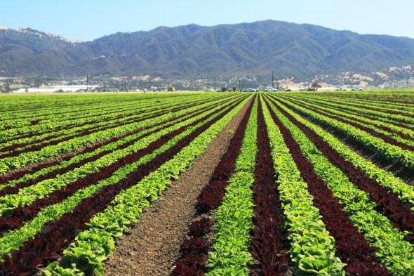 California U.S. irrigation lettuce Salinas Monterey County agriculture