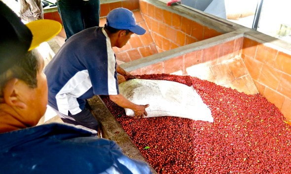 Boquete Panama Finca Lerida coffee tourism