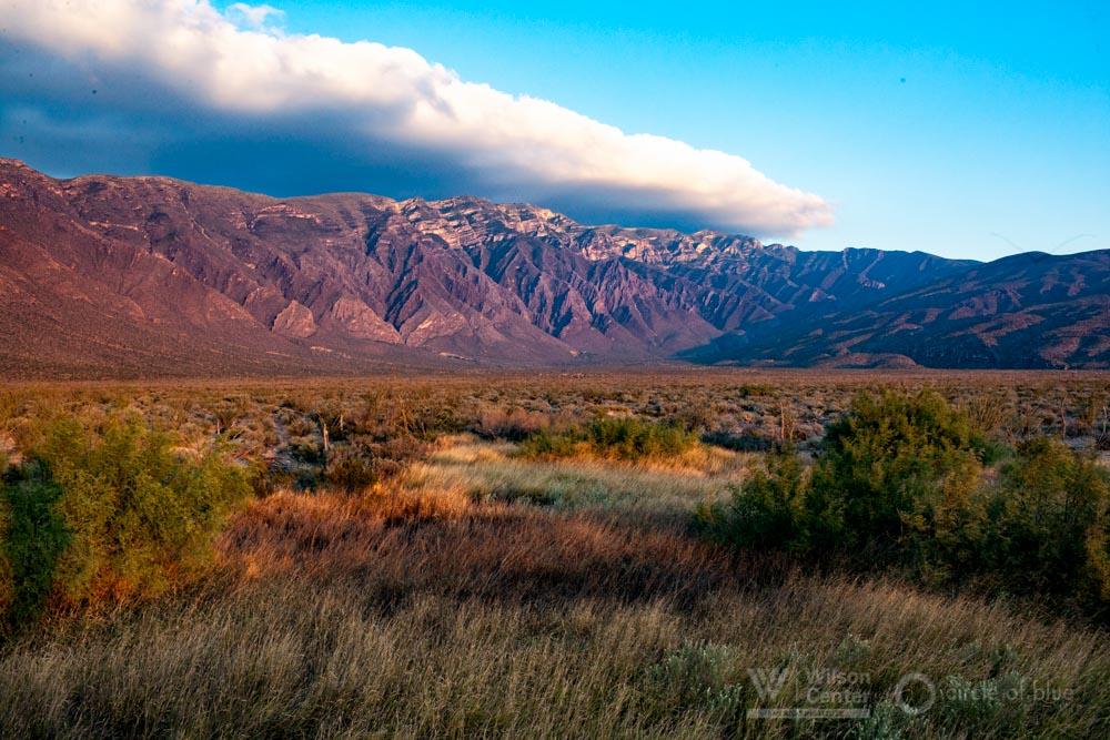 grasses sunset Cuatro Ciénegas Mexico national parks agency Janet Jarman Circle of Blue