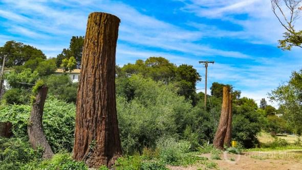 Oakland California stormwater management Sausal Creek restoration Dimond Park trees water