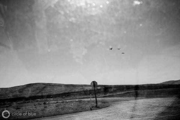 (November 5, 2013. Kettleman City, California) Seaguls from the coast fly far inland and into the dry landscape of California's Central Valley. Photograph by Matt Black.