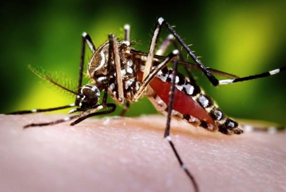 Zika virus health Aedes aegypti mosquito water Brazil