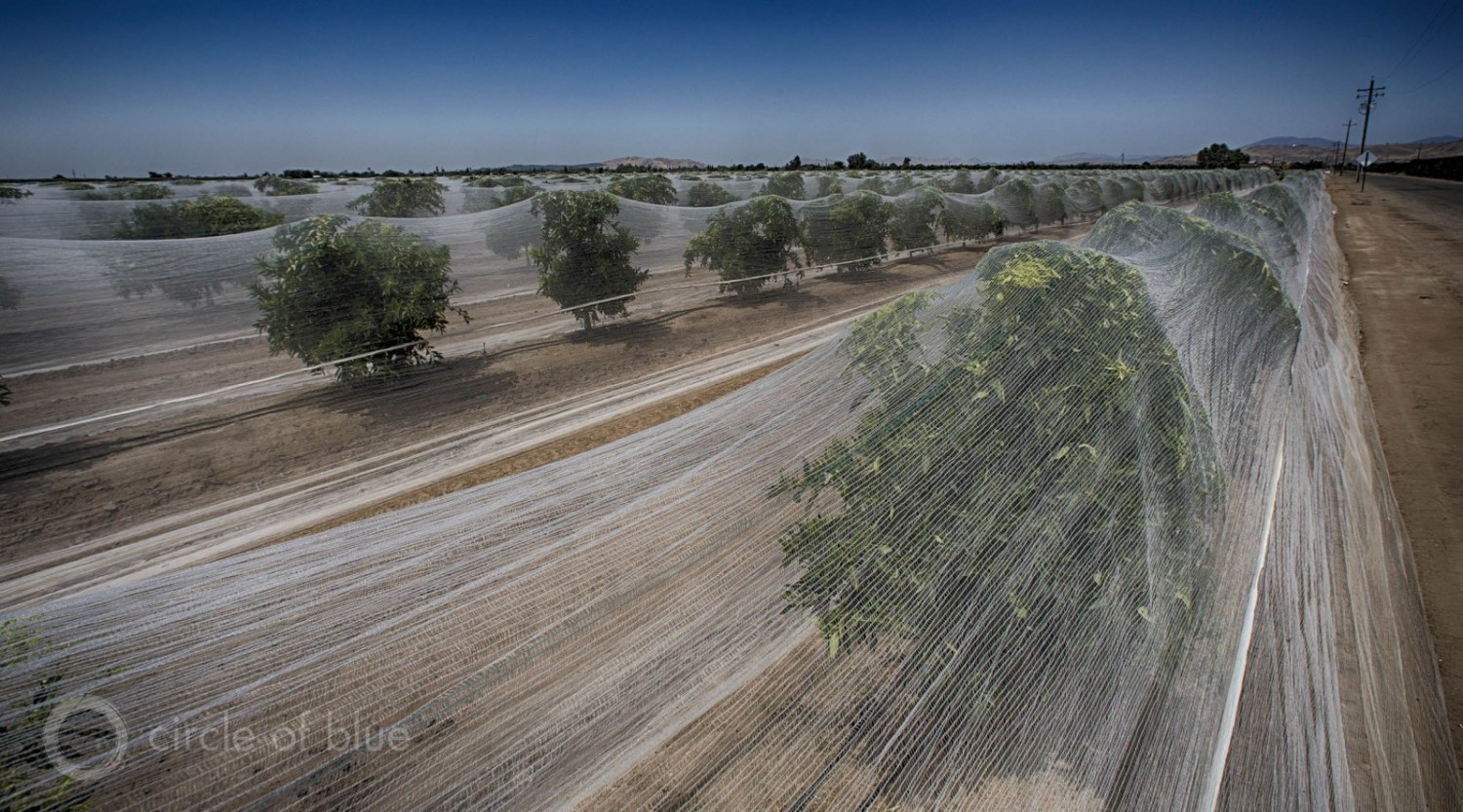 Production agriculture, based on single crops and huge water consumption, sustained big financial losses globally from droughts. Here an orange grove in California. Photo © J. Carl Ganter / Circle of Blue