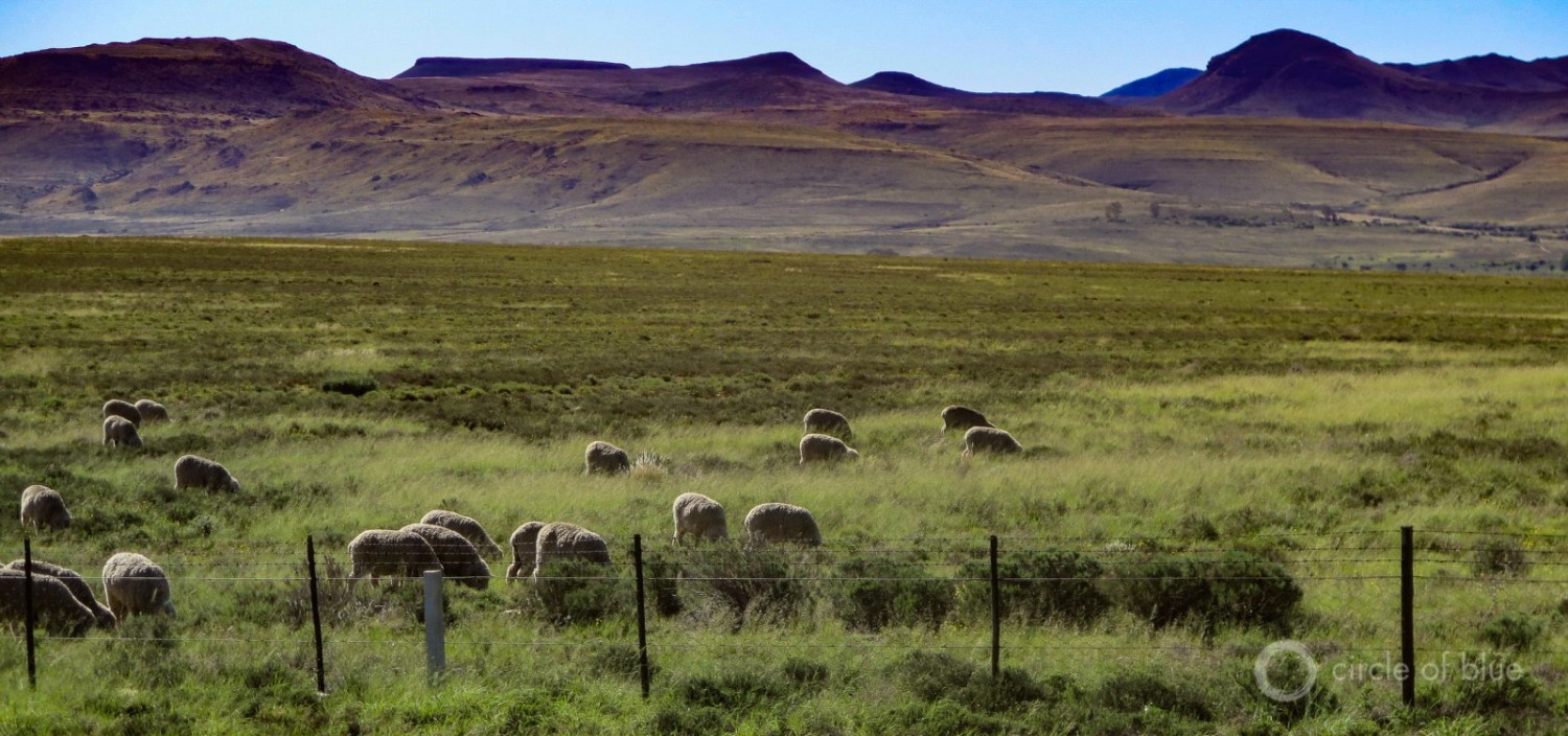 Sheep graze the broad valleys of the Karoo in Northern Cape province.